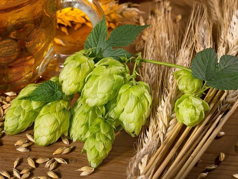 All About Hops 1